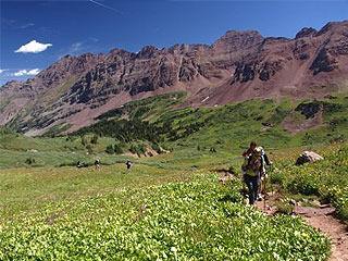 Bear encounters shut down campground near Aspen | Colorado