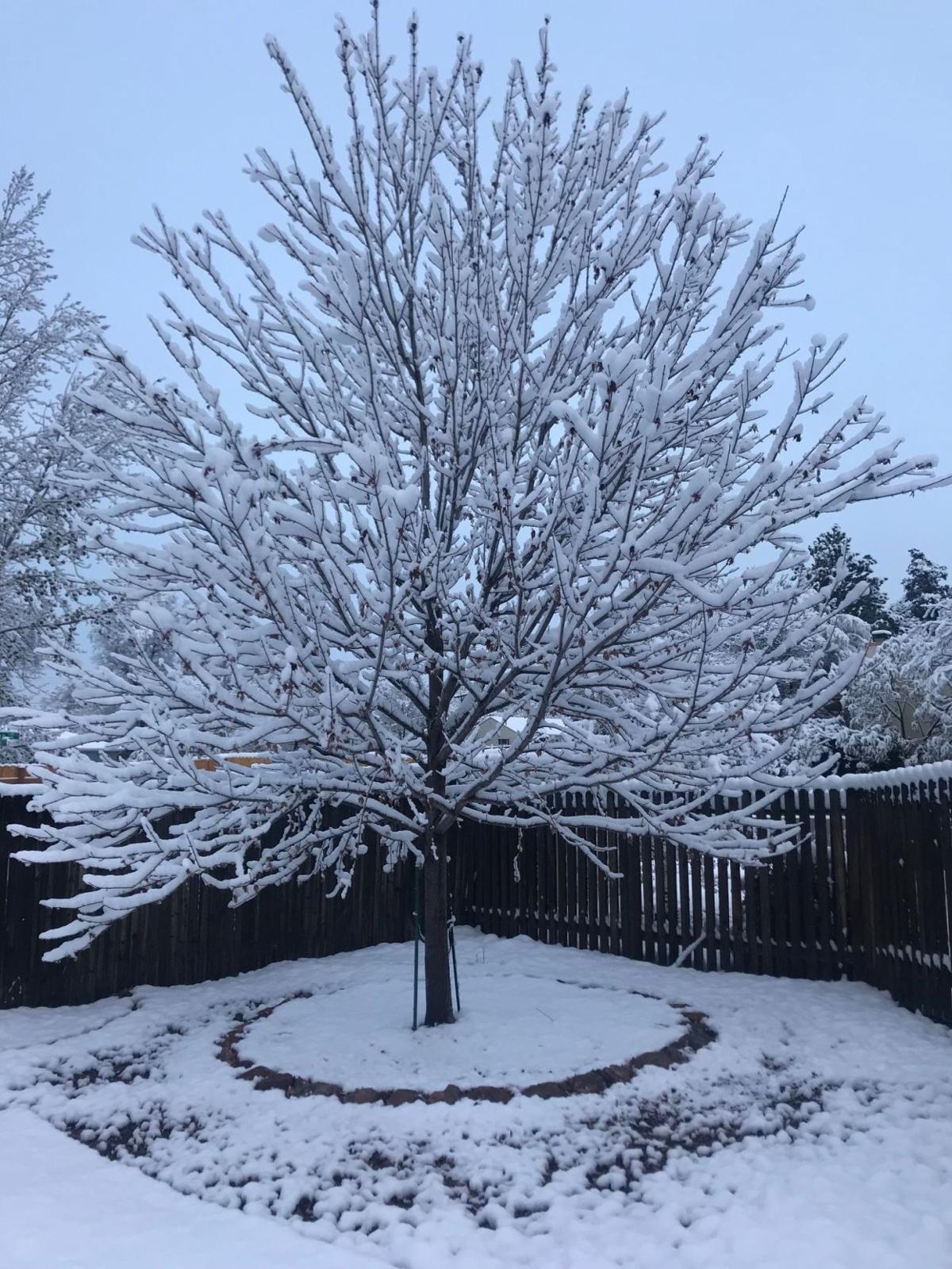 snow knob hill 103118