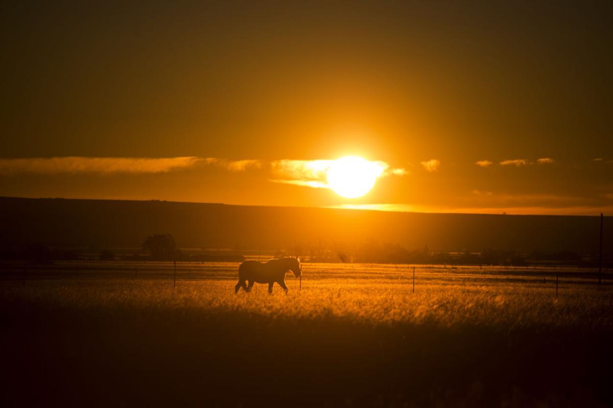 SUNRISE HORSES WEATHER