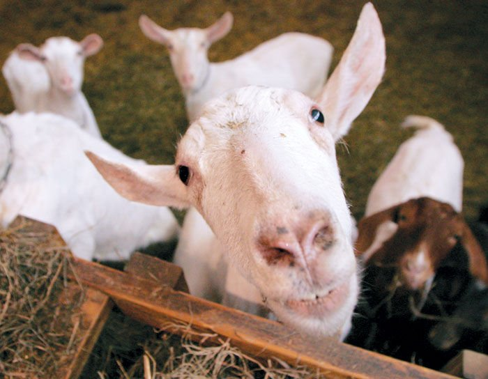 Baaa-uy local! Farmers find value in selling locally