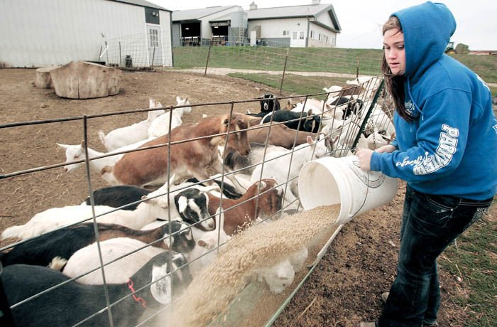Wisconsin leads nation in dairy goats, farms