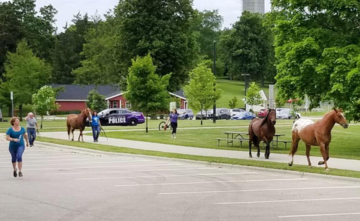 190625_HORSES02