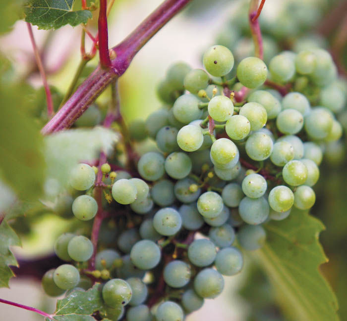 Vineyard reflects goal of quality wine and a rural lifestyle