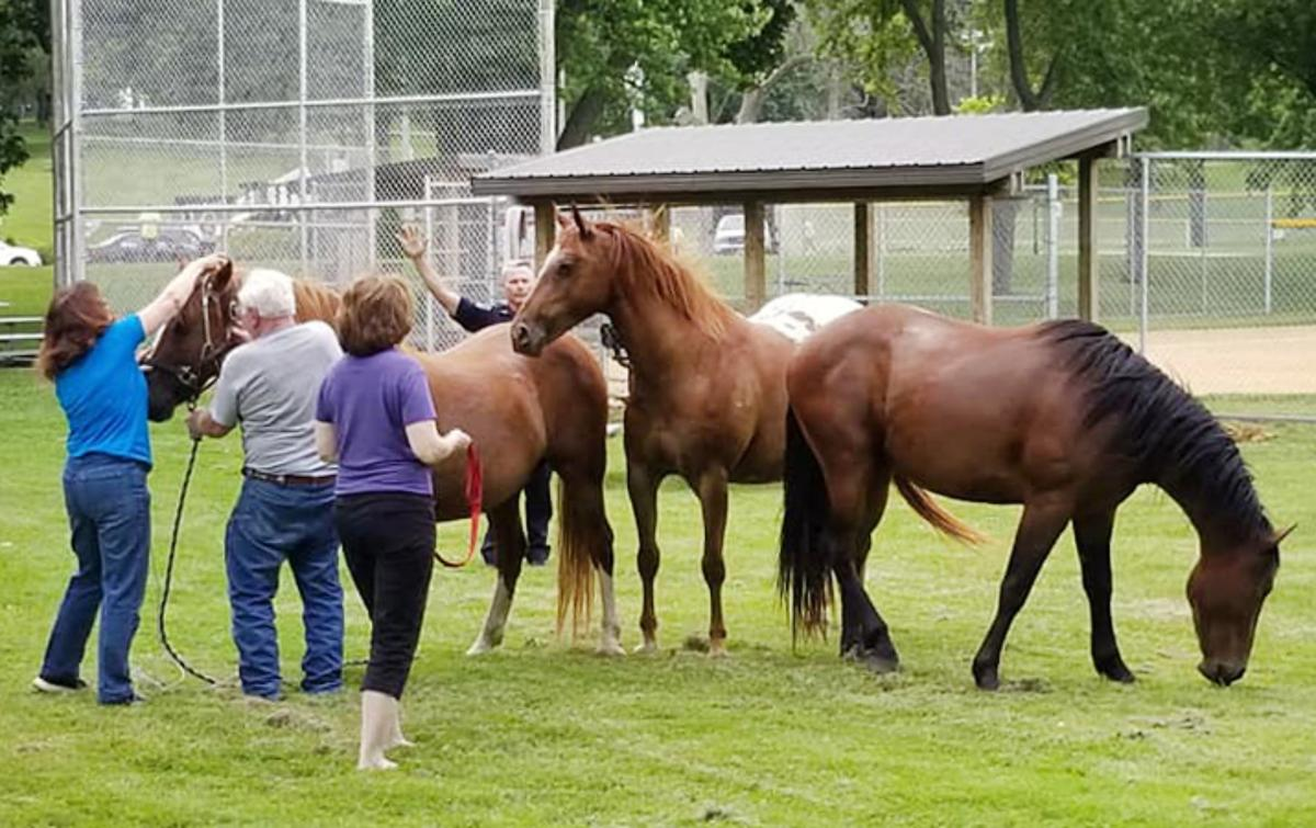 190625_HORSES01