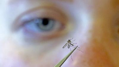 JVG_210603_MOSQUITO01