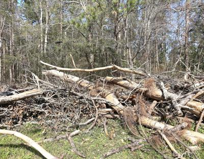 Storm debris clean-up goes to court