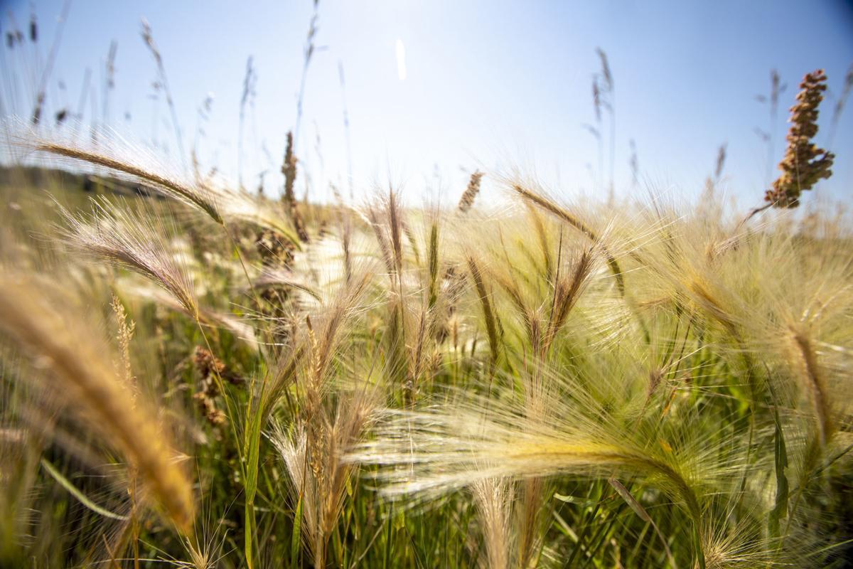 Dry vegetation