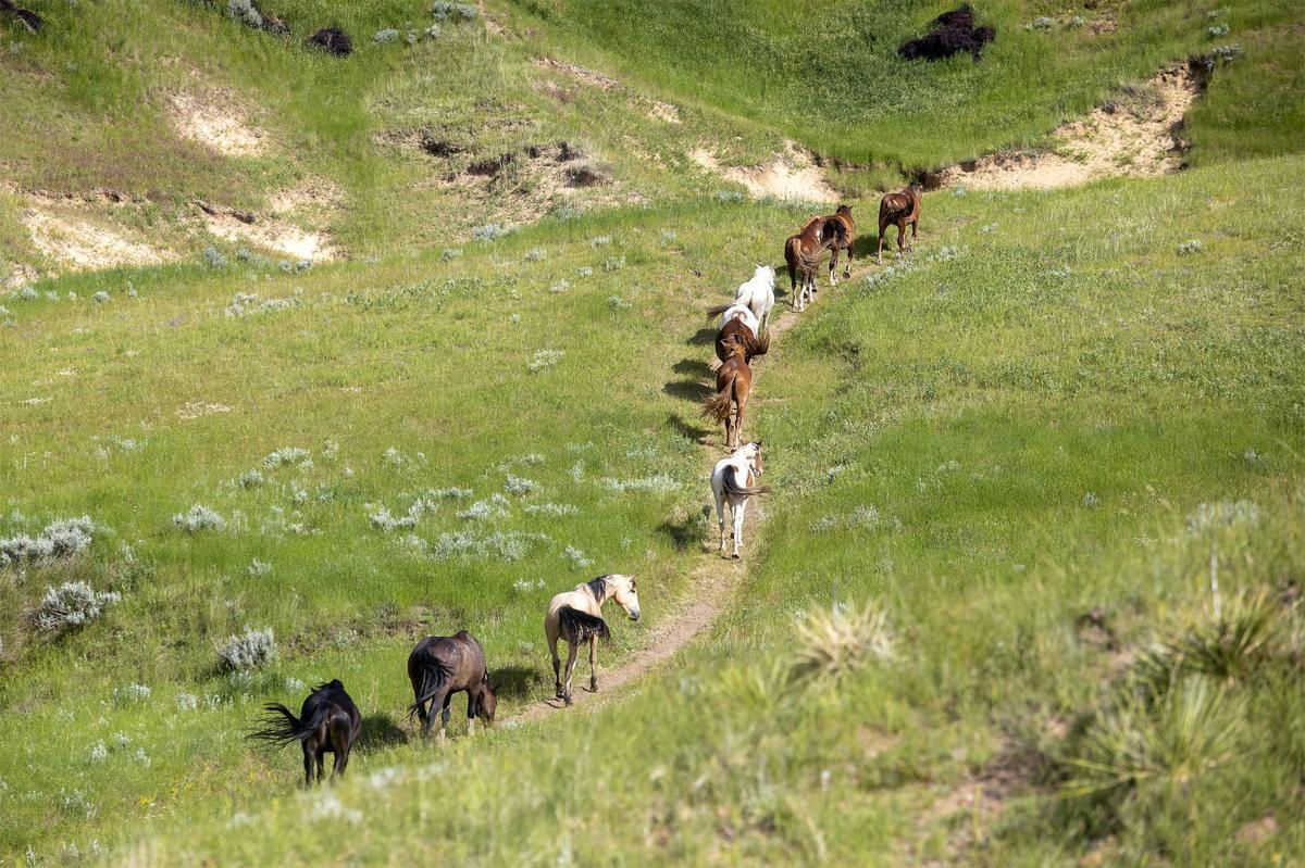 Centennial section trails