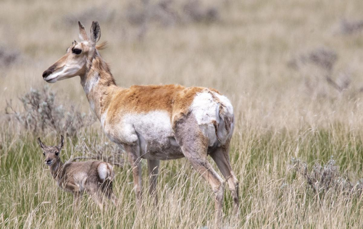 Dry weather hunting impacts