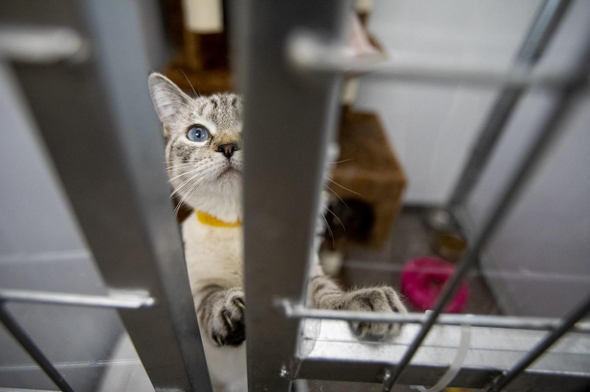 Animal Adopting
