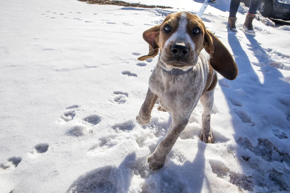 Rescue puppy in training