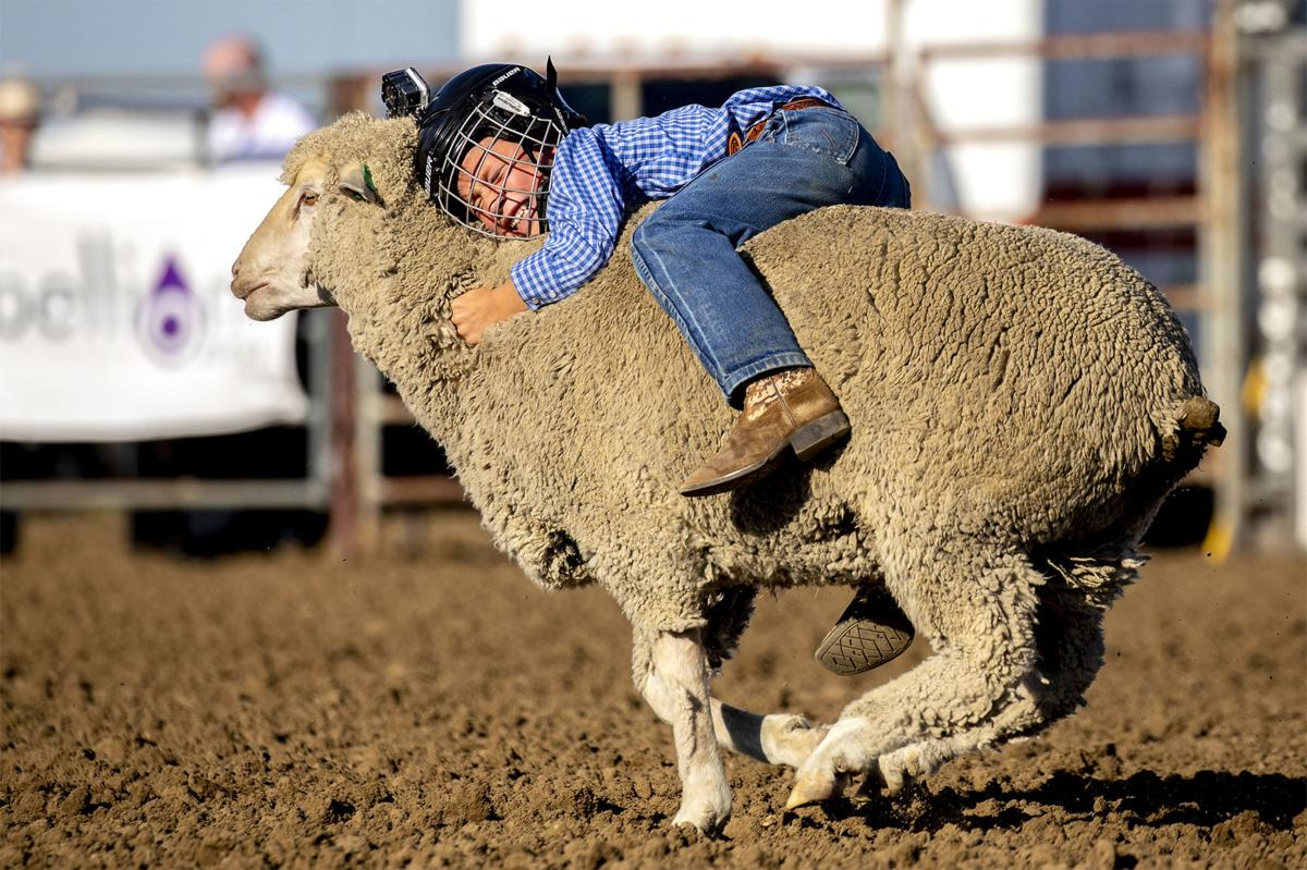 Cowboys Young And Old Challenged At Campbell County Fair