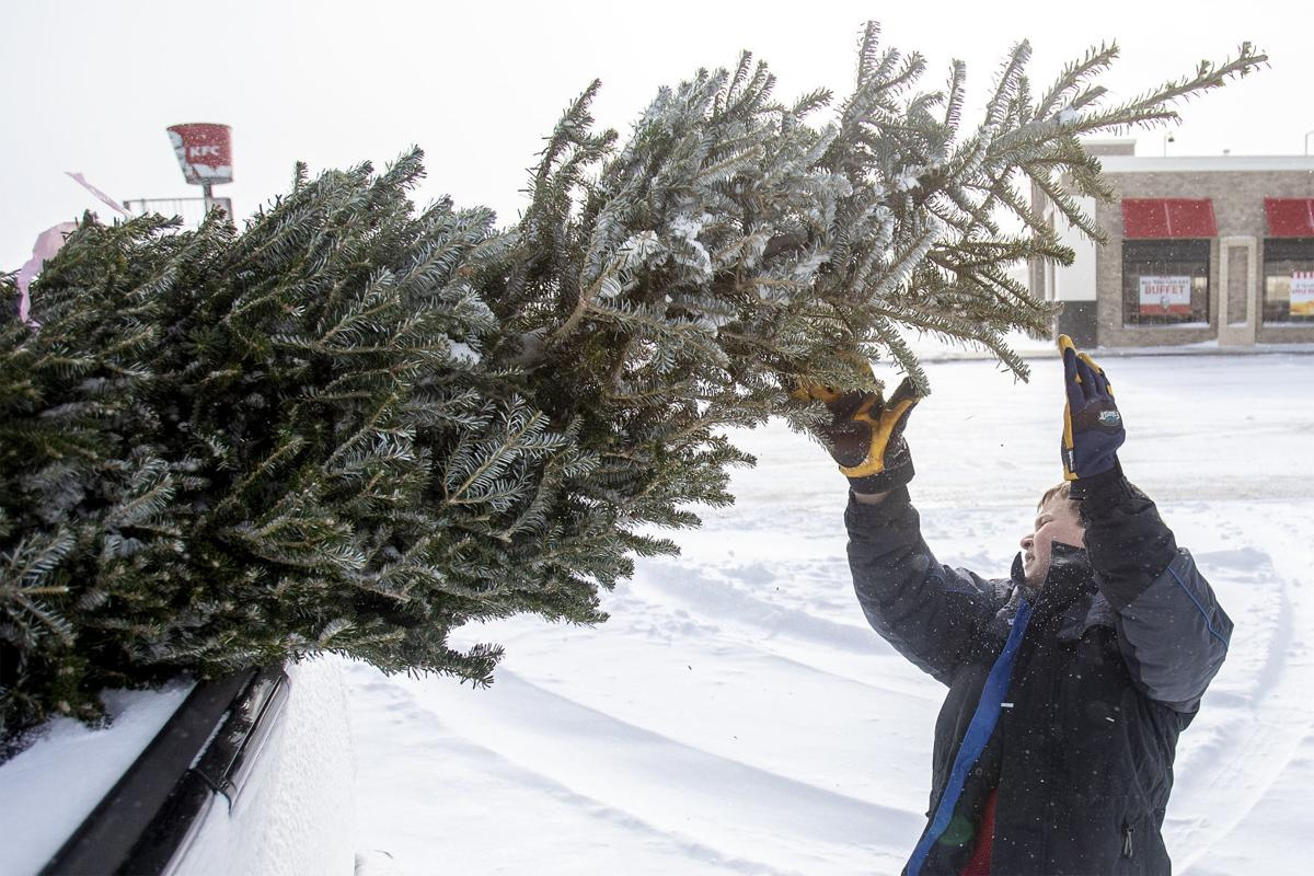 Boy Scouts Christmas trees