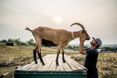 Shawn and Zach Dorr's merry band of pack goats offer wilderness adventures for all