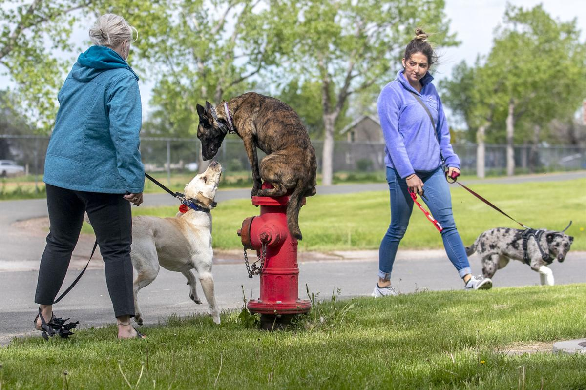 Doggo training