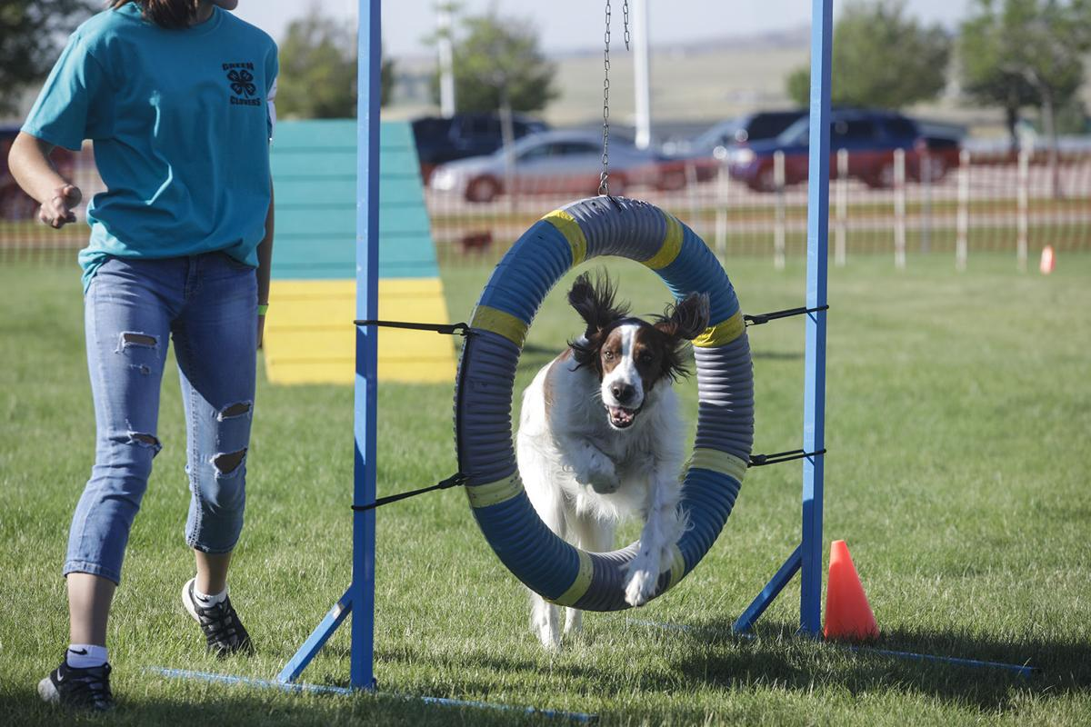 2020 Campbell County Dog Show