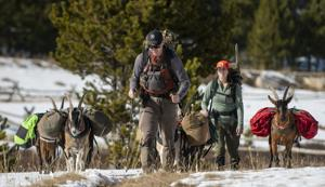 Use of pack goats on backcountry trips increases