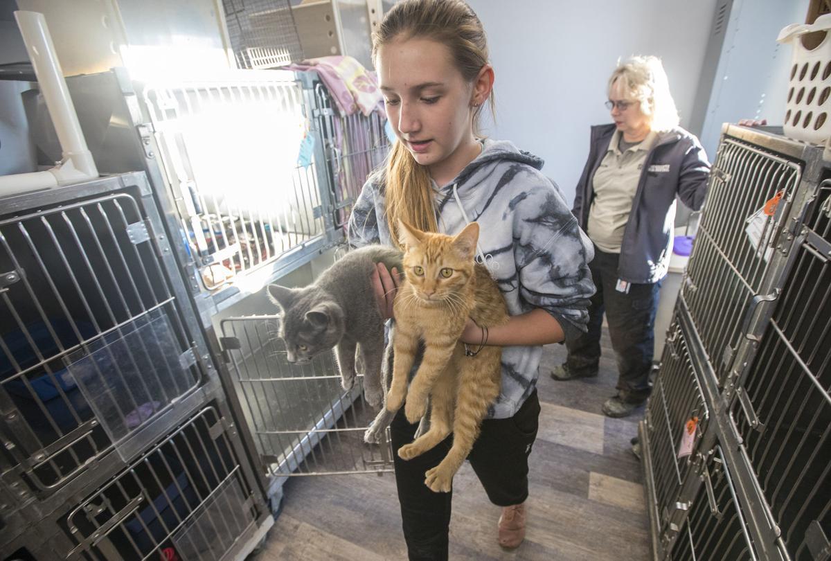 Animal Shelter move