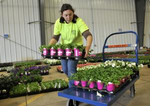 City needs volunteers for Adopt-a-Planter program