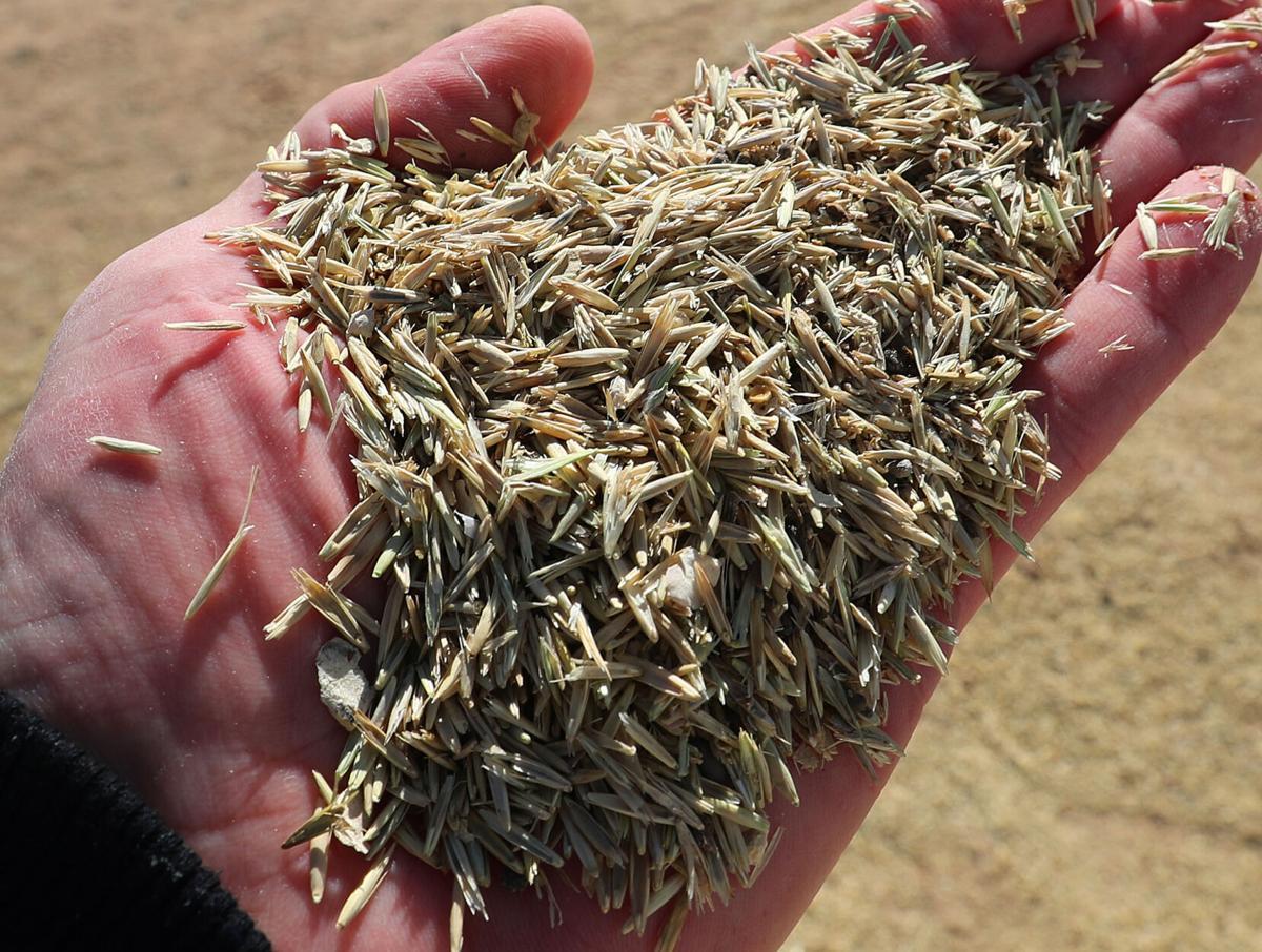 022321-Pine Gulch seed 1-CPT