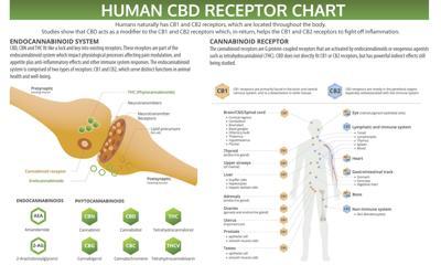 Human CBD Receptor Chart
