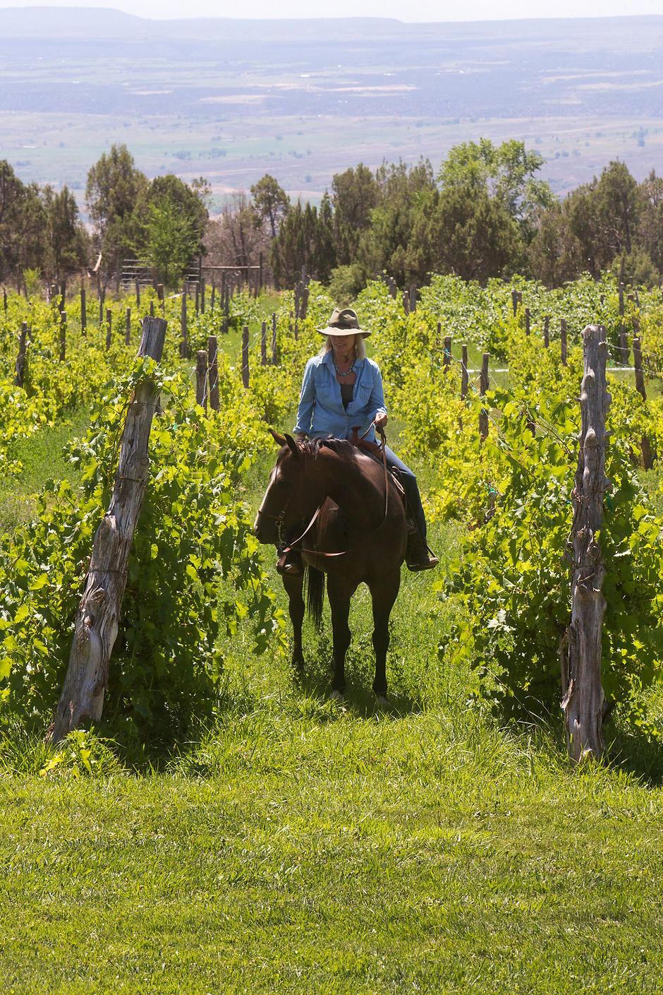 'Winelands of Colorado' creates 'wine adventure' for readers