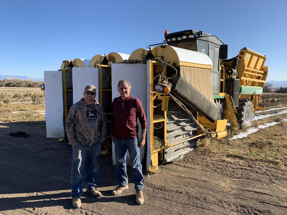 Colorado farmers invent a new way to harvest hemp