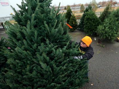 Boy Scout troops join forces to sell Christmas trees