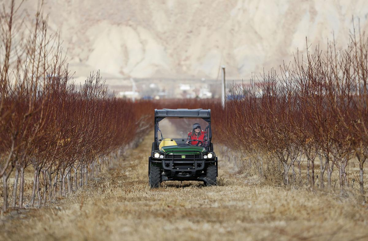 C&R Farms protects more fruitland through easement