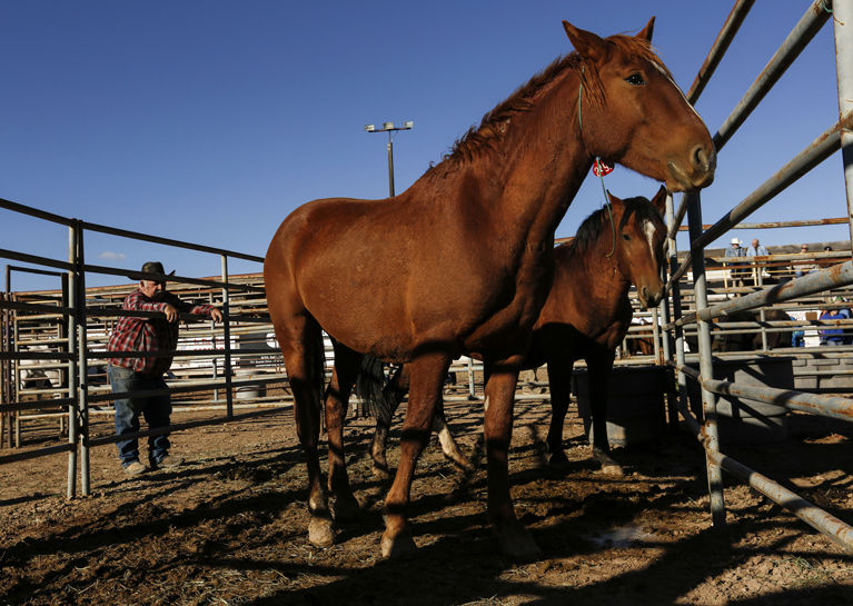 All 27 horses at auction get new homes