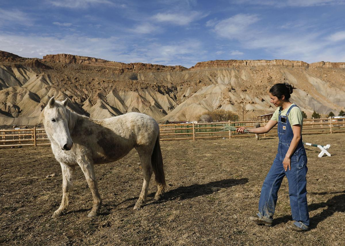 Wild about horses: Locals to get second chance to adopt Little Book Cliffs horses