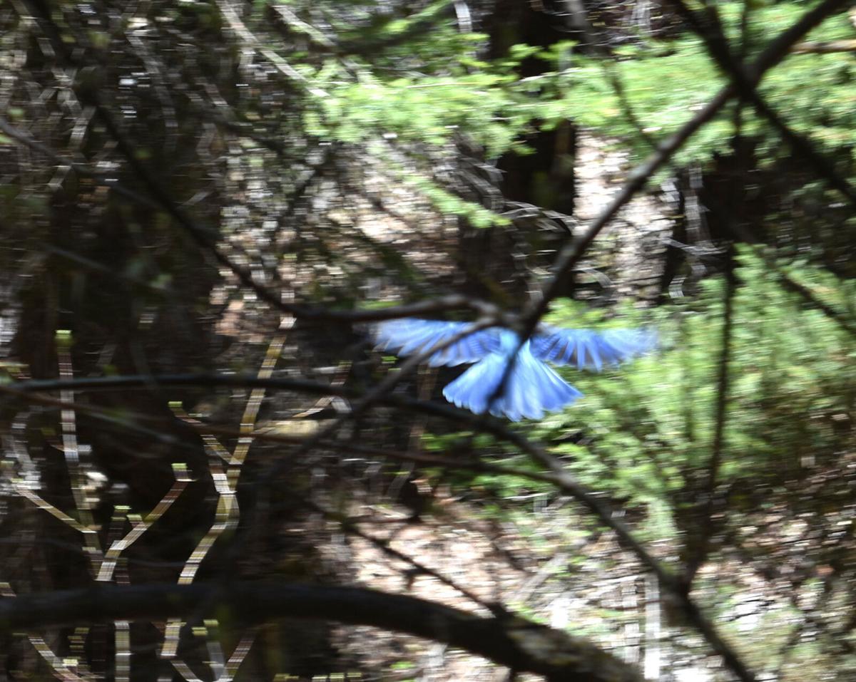Blue bird wings.jpg