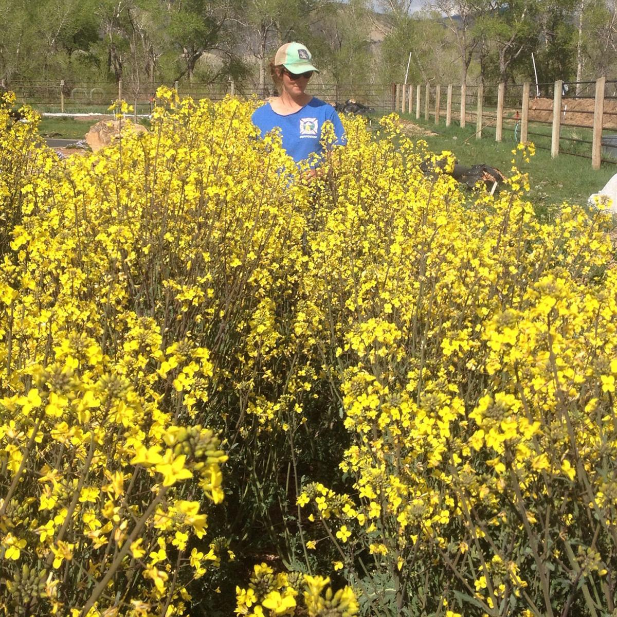 If You Have The Need For Seed Go To High Desert Home And Garden