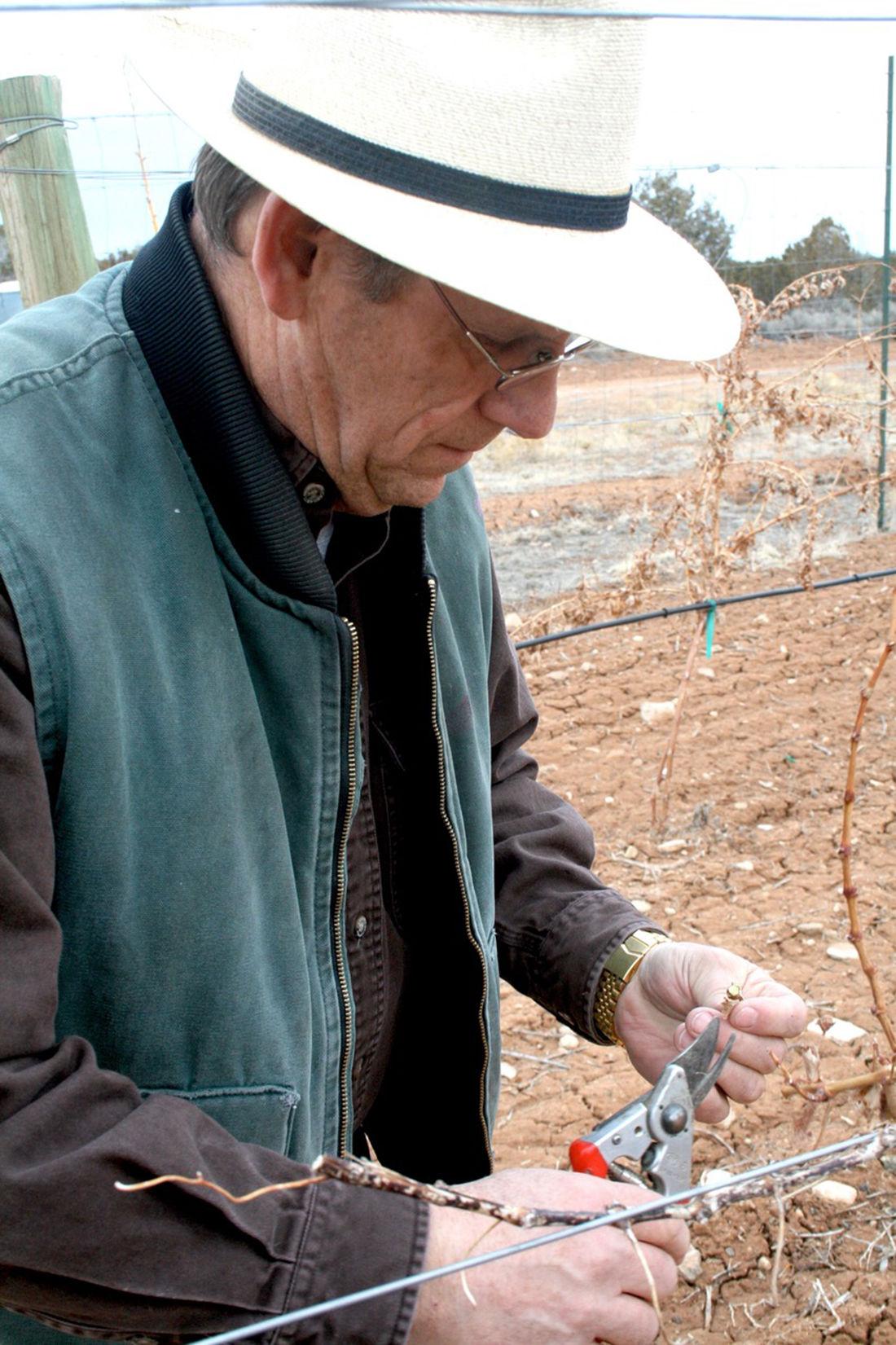 Sleepy Vines: Winemakers keep an eye out for bud break