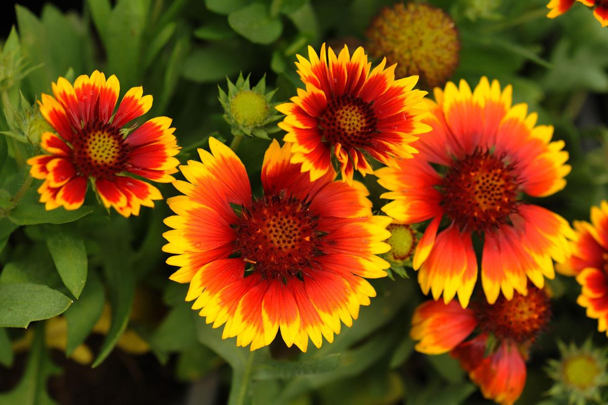 A Few Favorite Perennials To Consider When Making Changes To Your