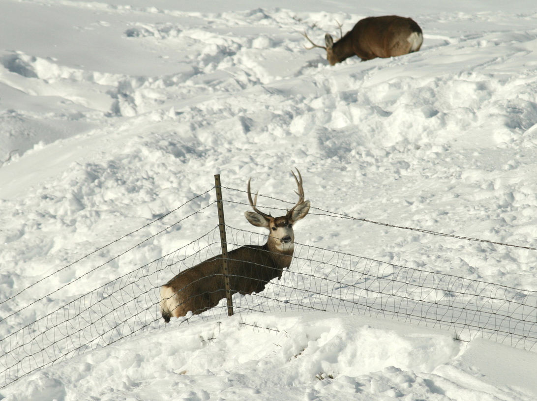 Luck of the draw | Hunting | gjsentinel com