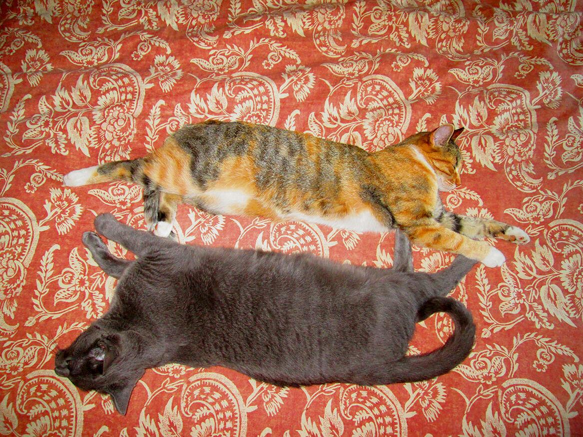 080220-ysi-cats_6_27971.jpg