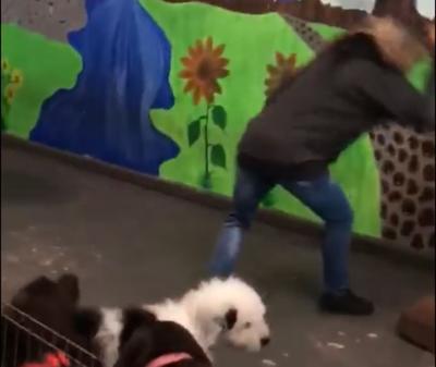 Viral dog video