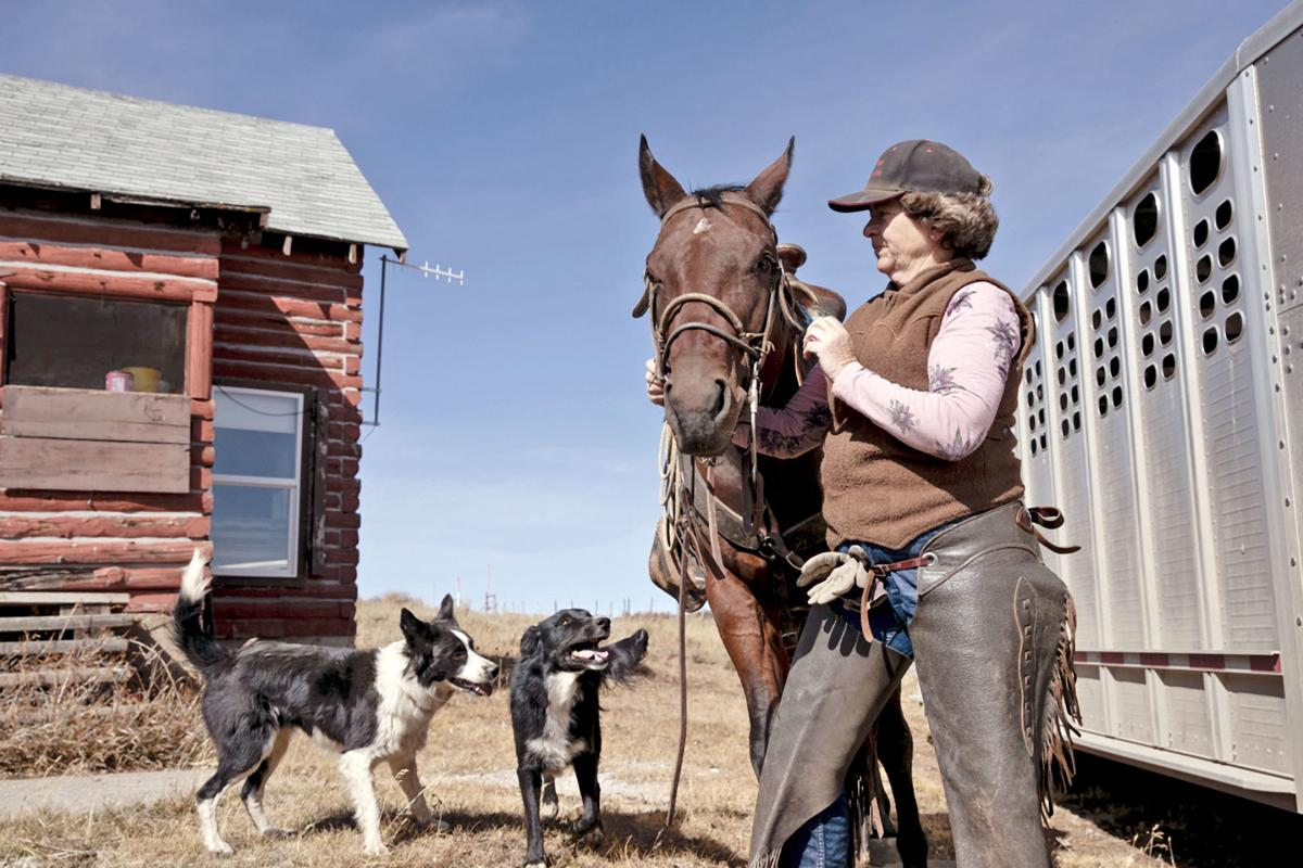 Van Winkle Cattle 02 ML 101019