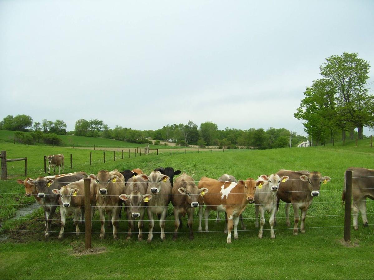 Their milkshakes will bring everyone to the barn - 2