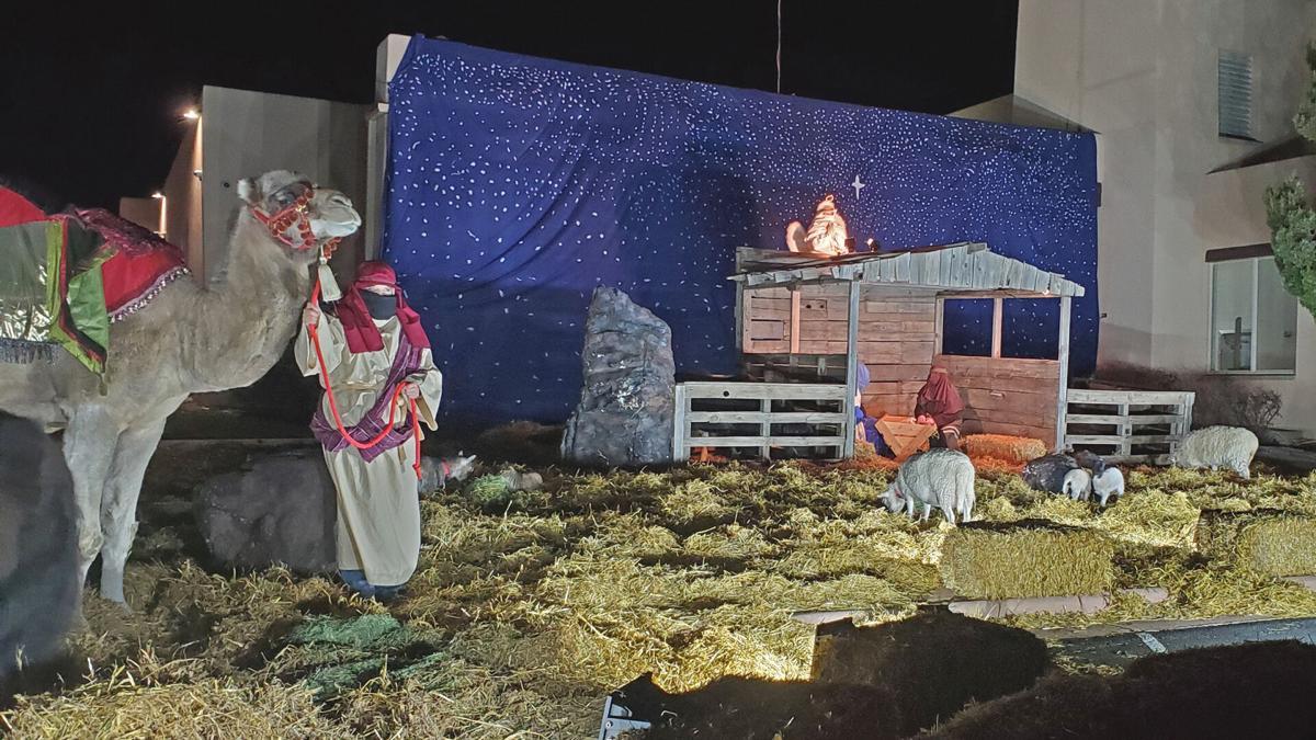 Nativity- camel