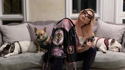 Lady Gaga and dogs