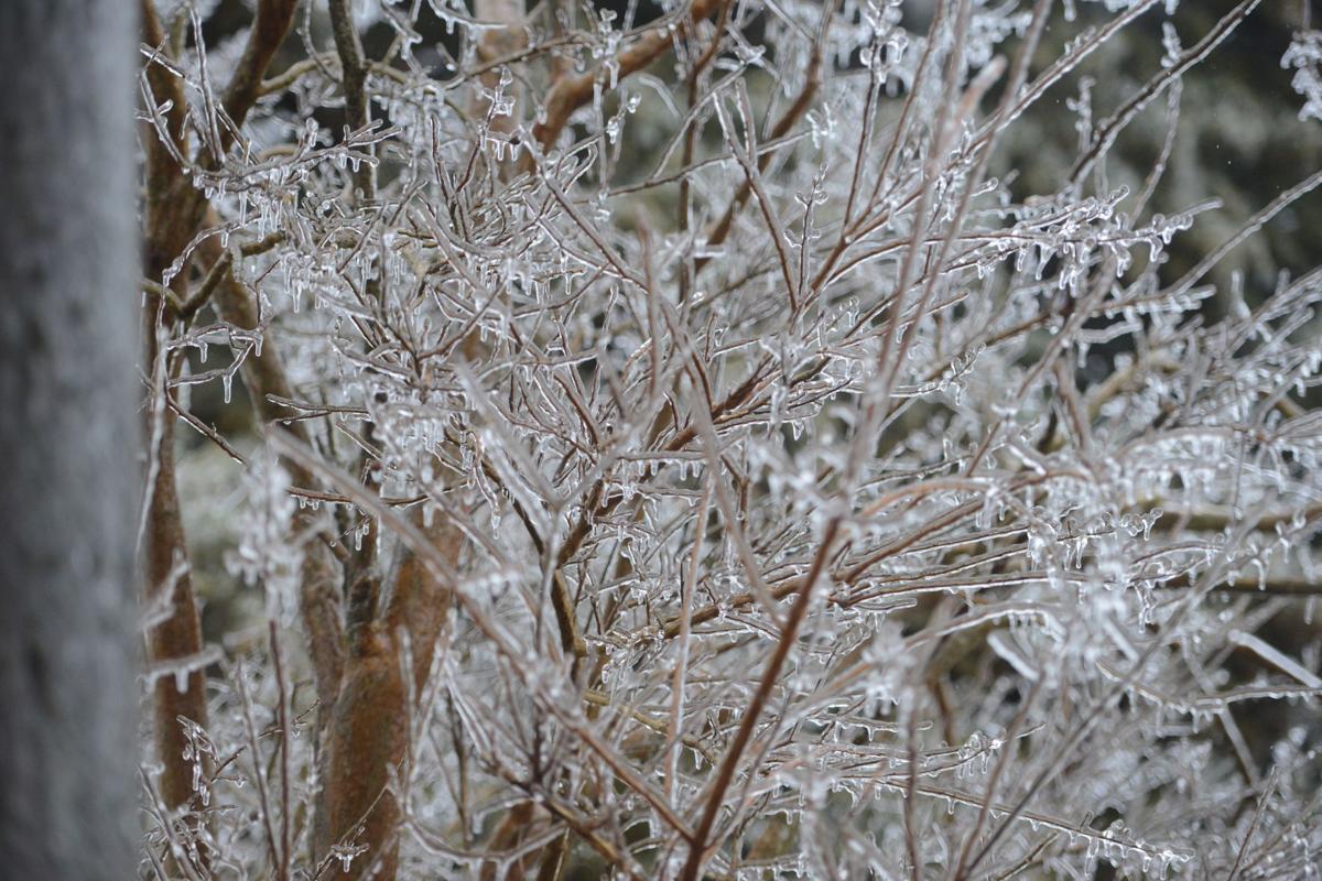 Frozen branches 3