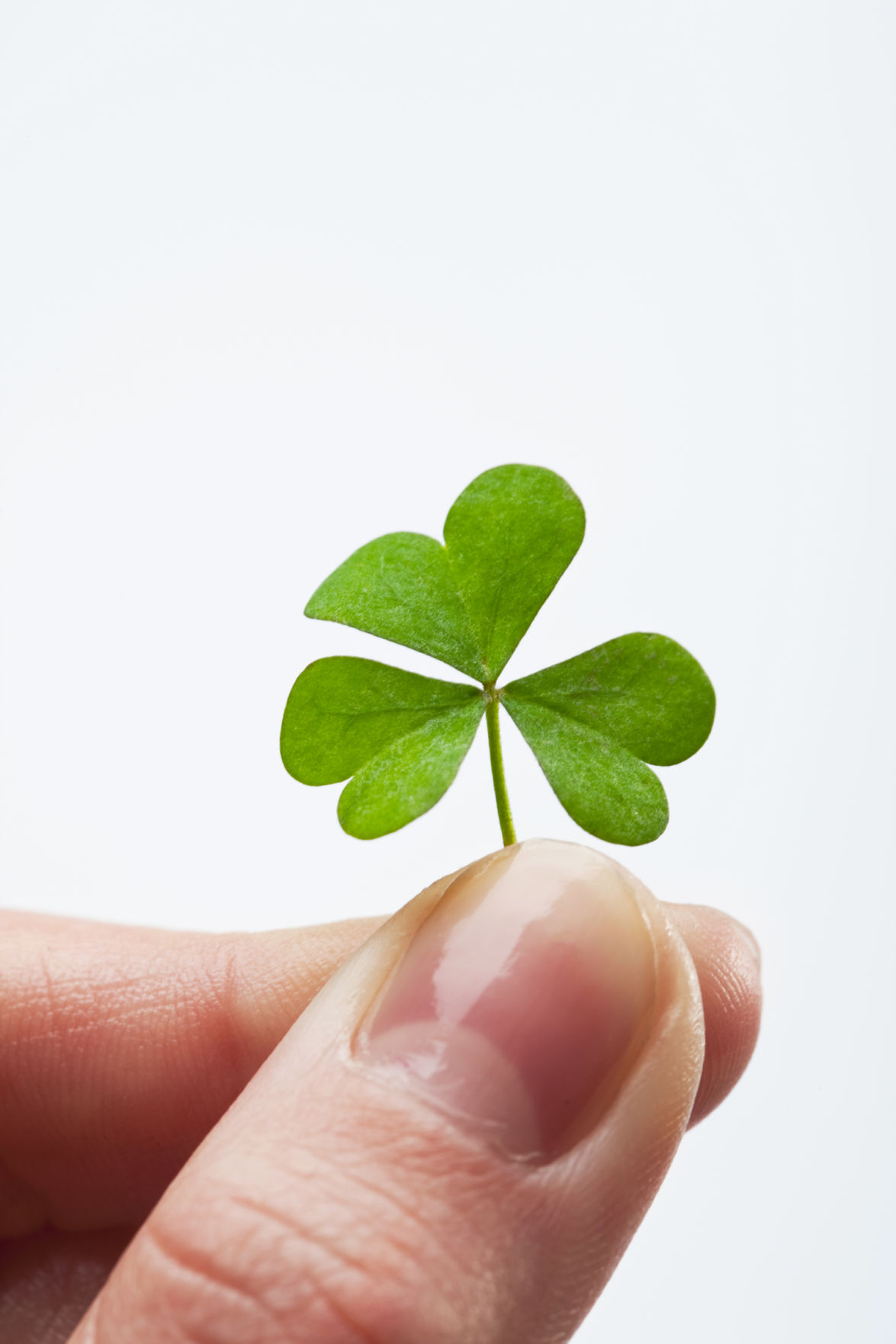 Uncategorized Legend Of The Shamrock luck and legend of the shamrock lifestyles godanriver com shamrock