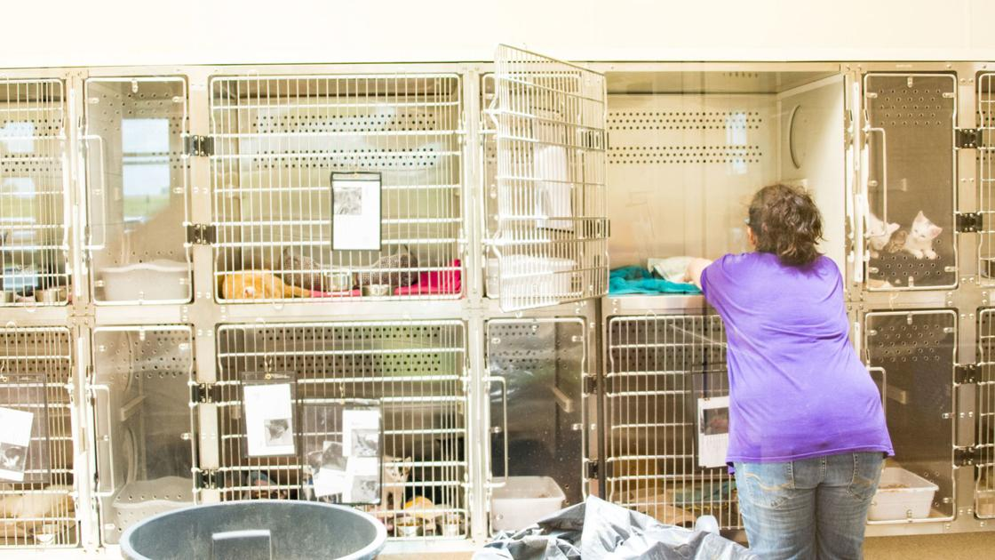 With an additional six months, Lynchburg Humane Society hopes to