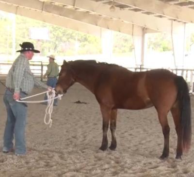 Lander University Equestrian Center uses horse therapy for veterans battling PTSD