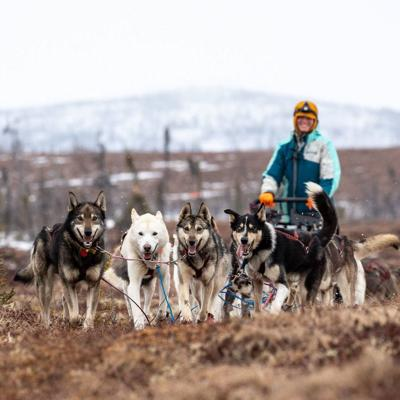 Gonzaga grad finishes Iditarod