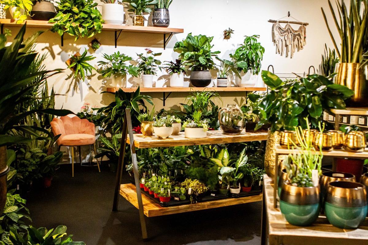 Fern Plant Shop houseplant display