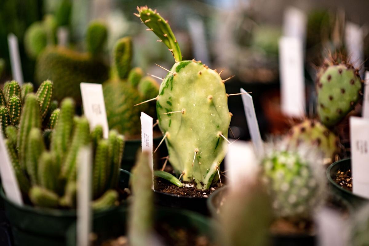 Fern Plant Shop