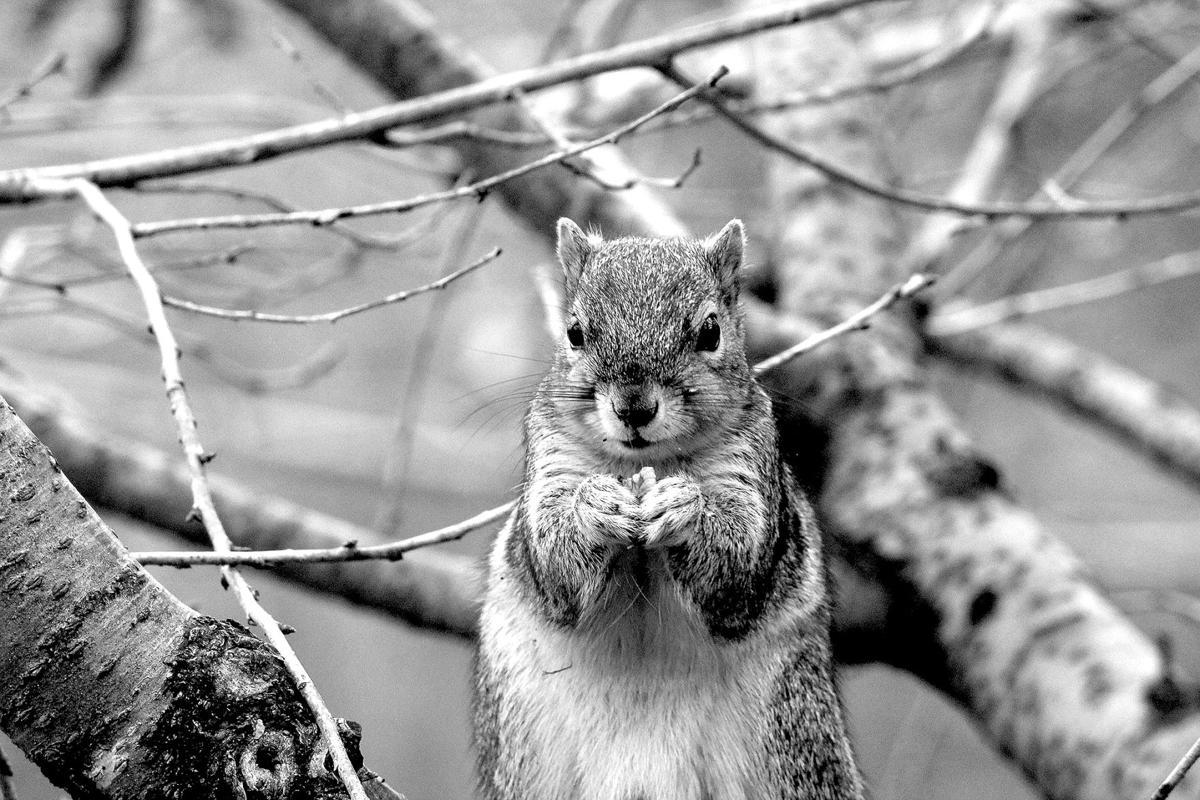 squirrel - Mark column.jpg